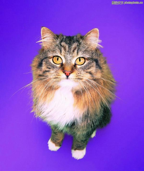 可爱之猫图,动物图片