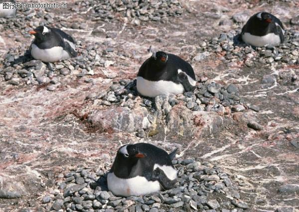 企鹅世界图,动物图片