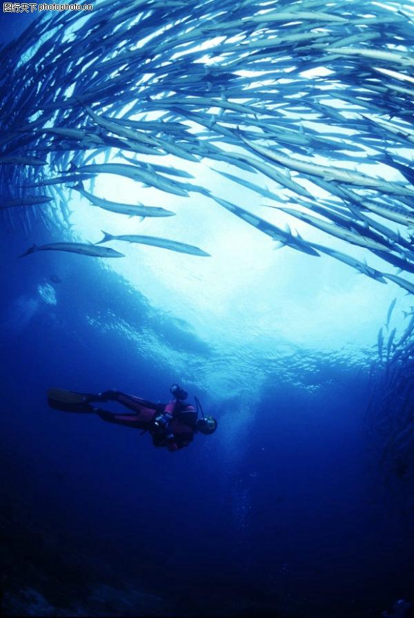 深海动物图,动物图片