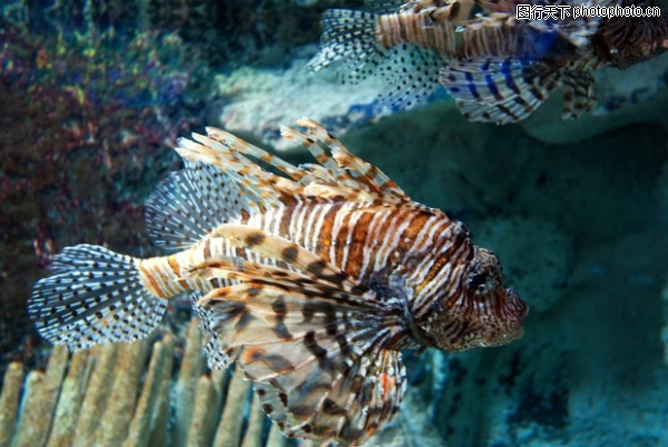 深海动物-动物-动物,深海动物